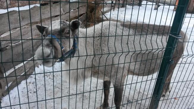 Зоопарк в ЦПКиО