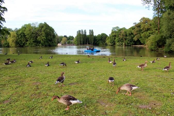 озеро в английском саду мюнхен