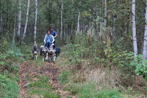 катание на собачьих упряжках екатеринбург