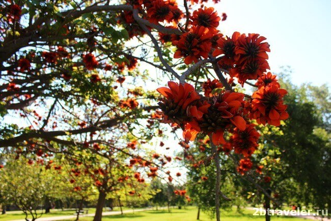 цветующие сады турии