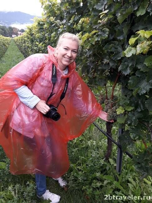 виноградники аббатства новачелла