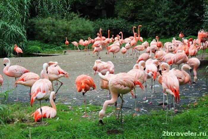 зоопарк прага фламинго