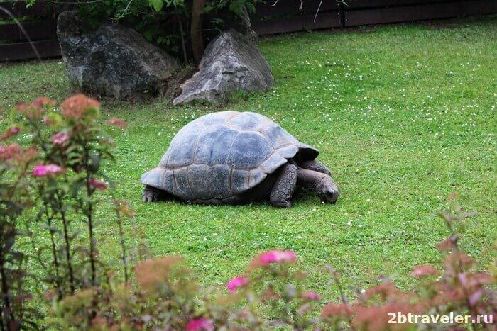 зоопарк прага черепаха