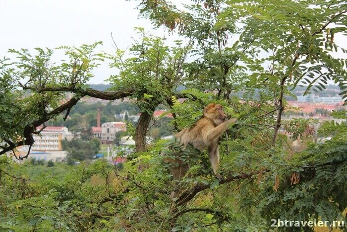 зоопарк прага обезьяна