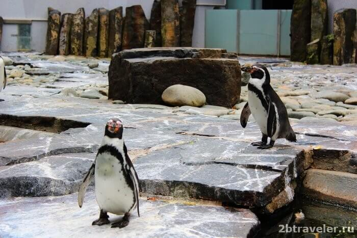 зоопарк прага пинвины