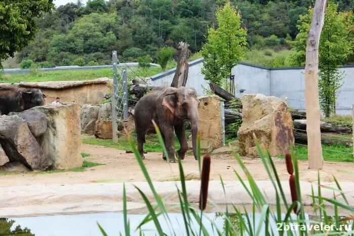 зоопарк прага слоны