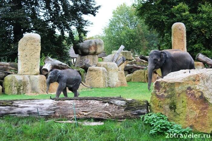 зоопарк прага слоненок