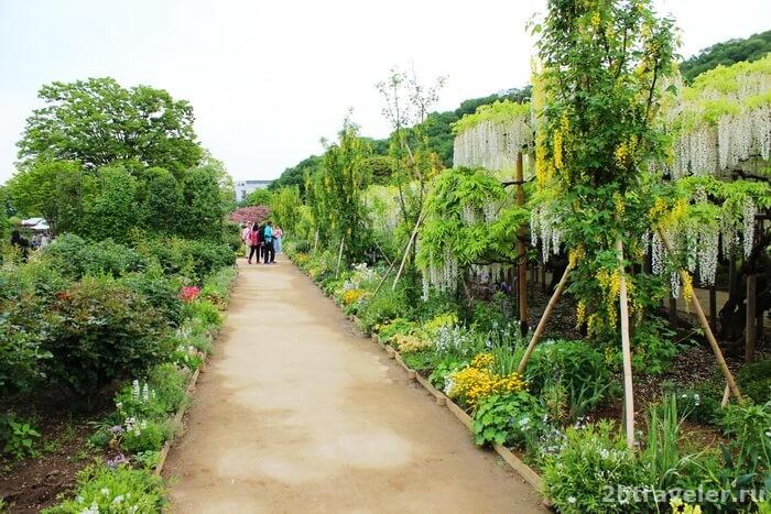 асикага парк