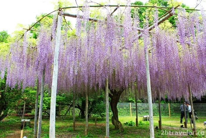 асикага парк япония