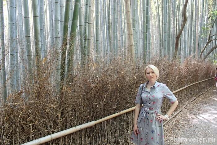 бамбуковый лес киото