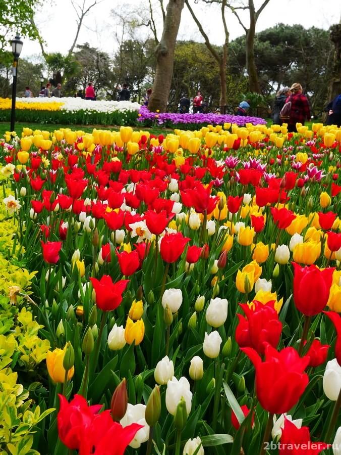 фестиваль тюльпанов в стамбуле фото