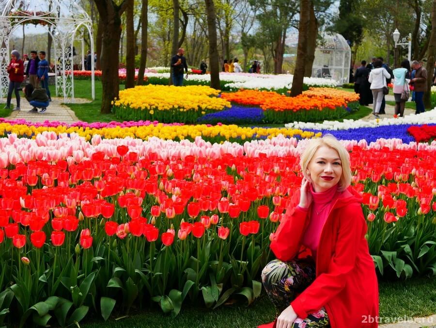 фото с тюльпанами стамбул