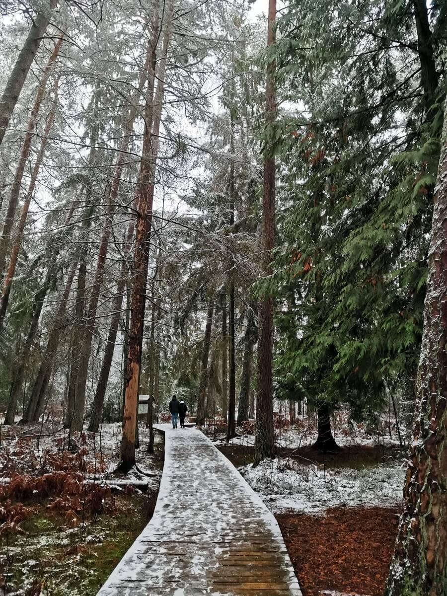 Калининград отдых зимой